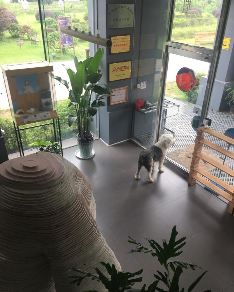 Sunny entryway with plants, sculpture and dog